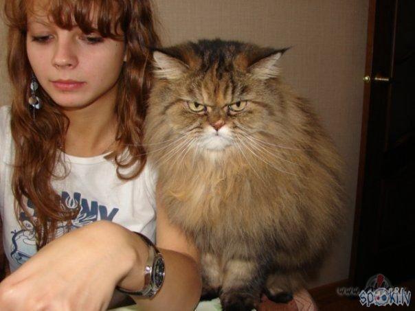 А как к вам относится ваш питомец? Человек и кошка .